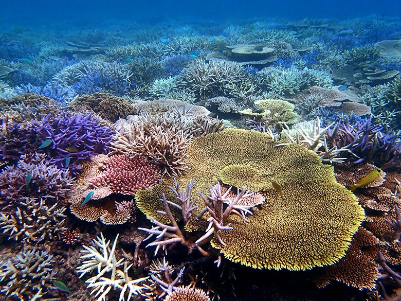 サンゴの苗作り&養殖体験コース