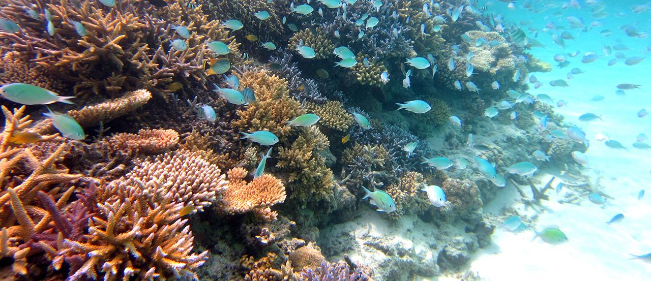 サンゴの苗作り&養殖体験コース1
