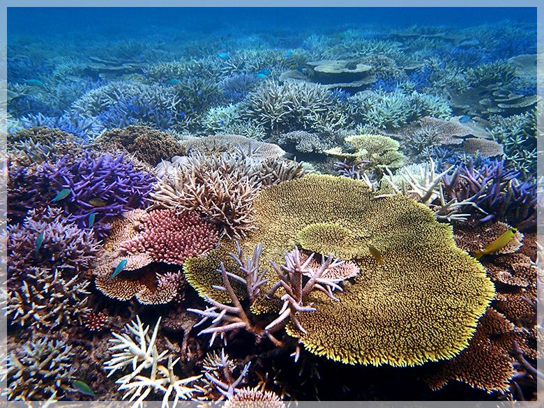 サンゴの苗作り&養殖体験コース3