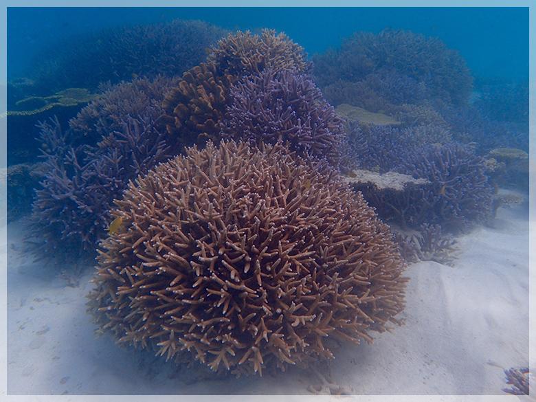 サンゴの苗作り&養殖体験コース4