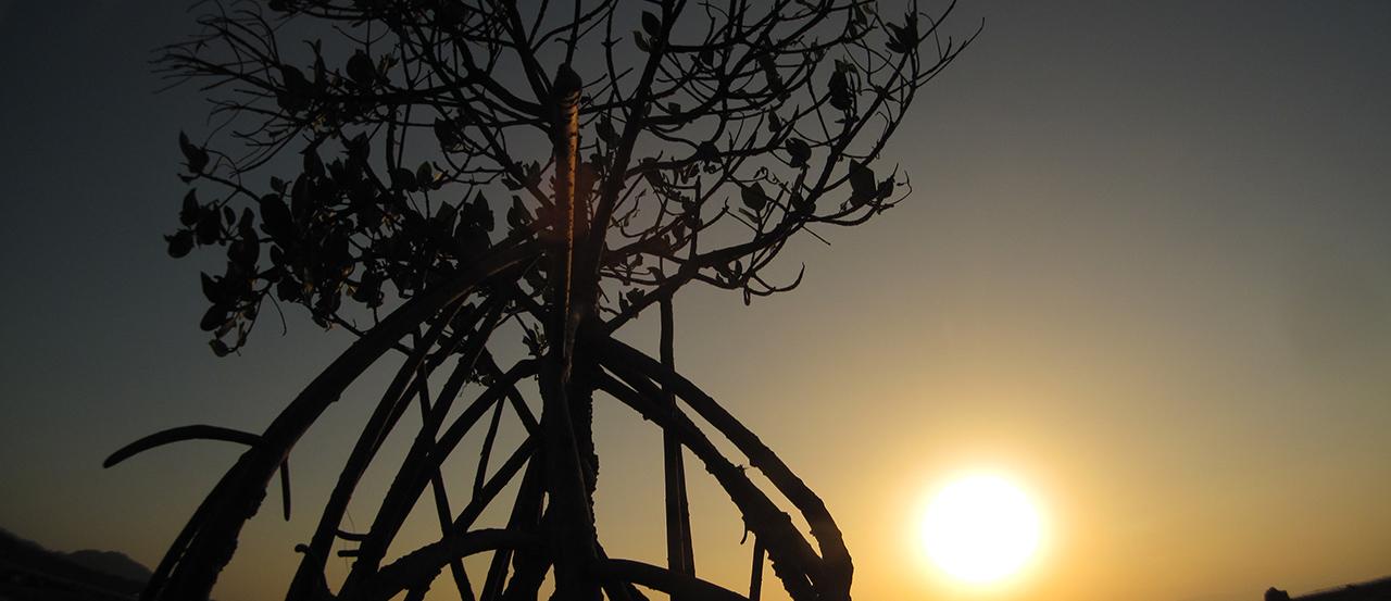 石垣島絶景ツアー